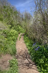 Coastal Path in Spring