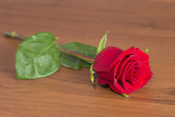 Fine red rose on the polished wooden table