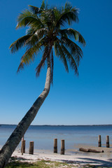 Palm Tree On The Caloosahatchee