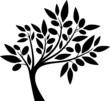 Olive tree I - 67559275