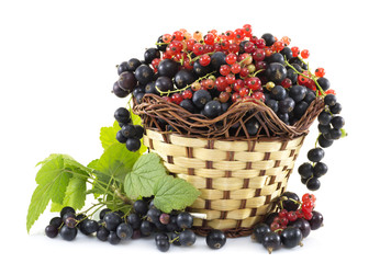 Basket with black and red currant isolated