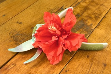 Red Hibiscus and pruning shears on brown wooden board