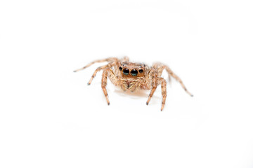 Super macro spider portrait