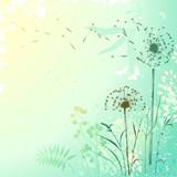 Fresh Dandelion Background - 67567620