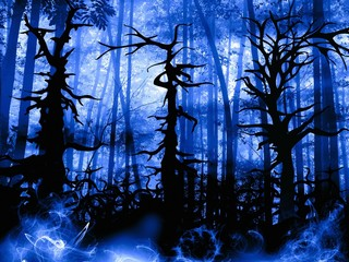 forest dark landscape with old twisted trees