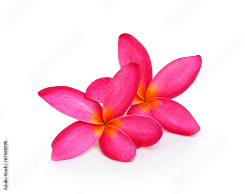 Deurstickers Frangipani Tropical flowers frangipani (plumeria) isolated on white backgro