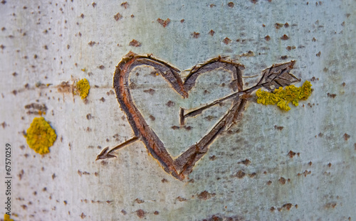 Birch tree with carved heart