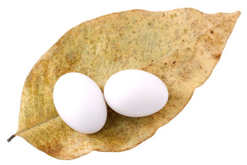 two pigeon egg and dried leaf isolated on white