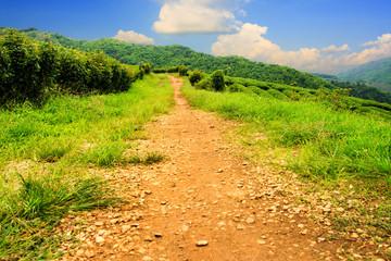 Landscape rural road