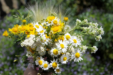 Summer bouquet of wildflowers