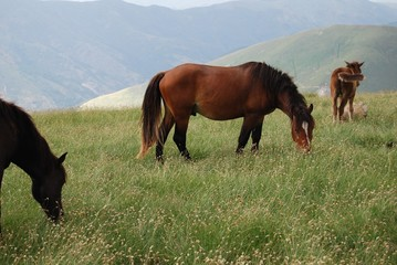 Horses at grass