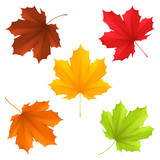 Fototapety Collection of color autumn leaves.