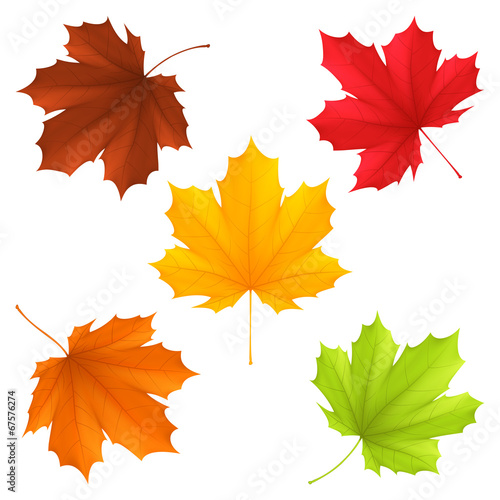 Collection of color autumn leaves. - 67576274