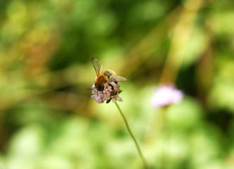 Insecto sobre una flor