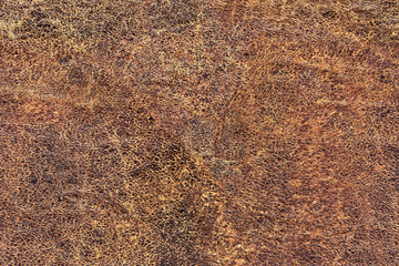 Old Cowhide Creasy Exfoliated Grunge Texture