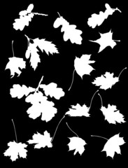 set of maple and oak leaves silhouettes isolated on black