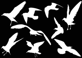 set of nine gull white silhouettes