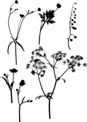 six black wild flowers on white illustration