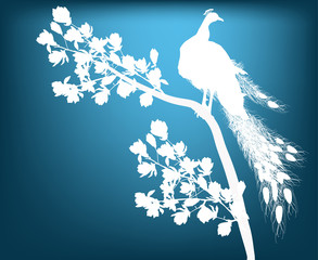 white peacock silhouette on dark background