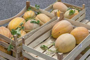 Farmers market and melons in a wooden crates