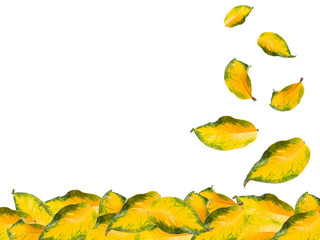 Close up green and yellow fall leaf isolated
