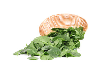 Young spinach in a wicker basket.