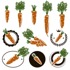 Carrot set. Vector