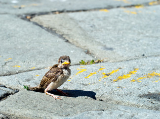 One fallen sparrow in street. Biblical parable or metaphor maybe