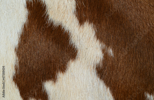 canvas print picture Fragment of a skin of a cow