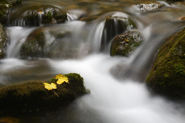 Mountainstream with autumn leave and slow shutter speed.