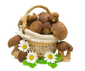 basket with mushrooms and daisy flowers on a white background