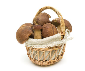 forest ceps in a basket on a white background close-up. horizont