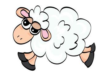 biała owca