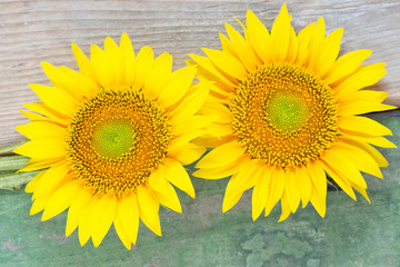 Two sunflowers on wooden background