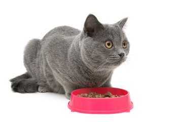 cat sits beside a bowl of food. white background.