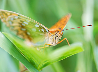 Orange butterfly on green leaf macro