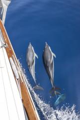 Delphine begleiten eine Yacht