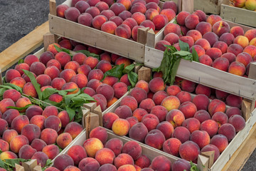 Farmers market peaches in a wooden crates