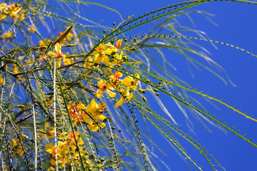 Green Twigs and Yellow Flowers