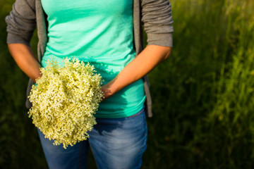 Young woman picking elderflower to make an infusion at home