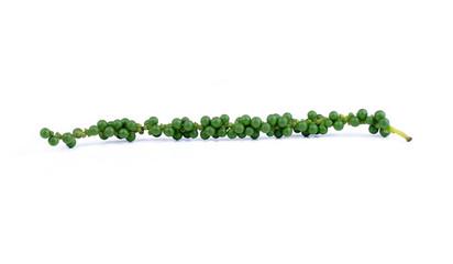 green peppercorns on white background