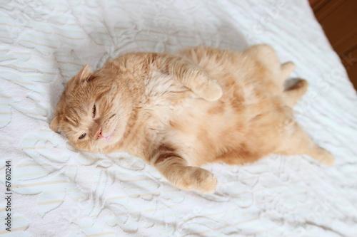 お腹丸出しの猫