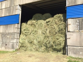 pile of hay in the barn