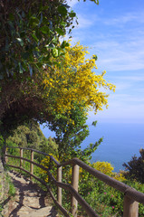 Mountain path in Cinque Terre
