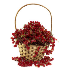 Wicker basket with ripe red currant