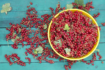 Still life with ripe red currant on green background