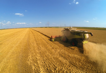 Combine harvesters on wheat field. Aerial view by a drone