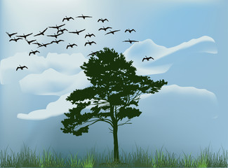 single pine tree under flying swans