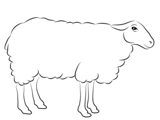 Sketch of a Sheep