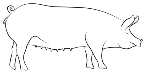 Sketch of a Sow